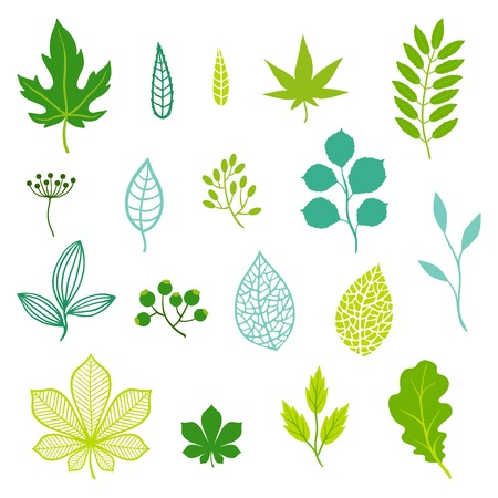 plant design: Set of green leaves and elements.