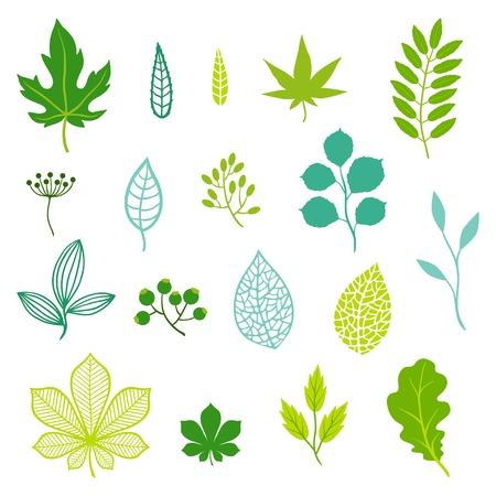 leaf shape: Set of green leaves and elements.