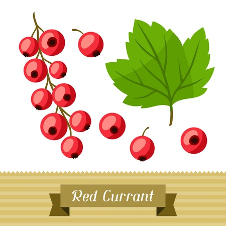 currants: Set of various stylized red currants.