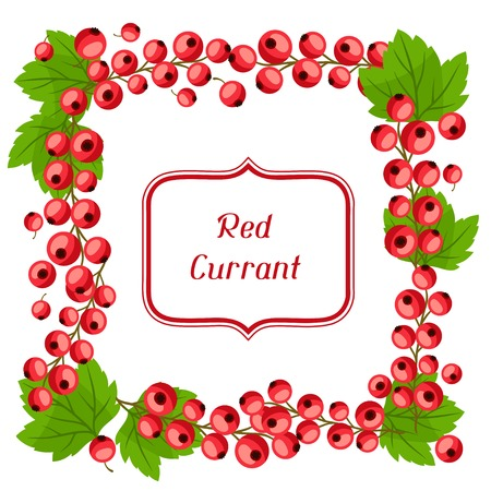 currants: Nature background design with red currants. Illustration