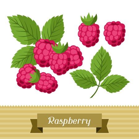 raspberries: Set of various stylized raspberries. Illustration