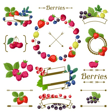 Set of various ribbons, labels with berries. Vector