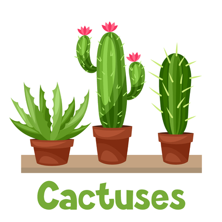 cactus: Collection of abstract cactuses in flower pot on shelves.