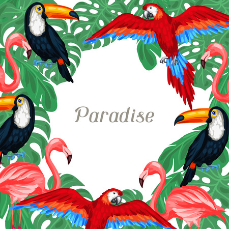 tropical birds: Tropical birds background design with palm leaves.