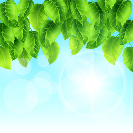 spring: Spring illustration with green leaves on sky. Card template floral design for packaging, greeting cards and advertising.