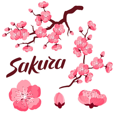 Japanese sakura set of branches and stylized flowers. Objects for decoration, design on advertising booklets, banners, flayers.