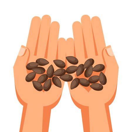 handful: Illustration of human hands holding handful seeds.