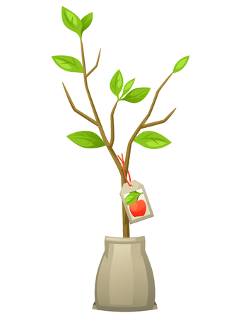 seedling: Seedling of apple tree with tag. Illustration for agricultural booklets, flyers garden.