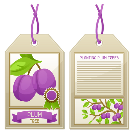 planting tree: Sale tag of seedlings plum trees. Instructions for planting tree.