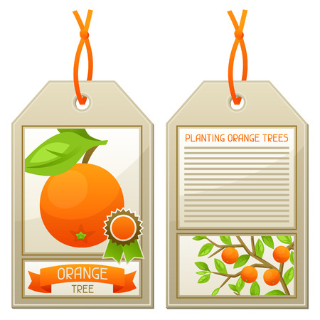 planting tree: Sale tag of seedlings orange trees. Instructions for planting tree.