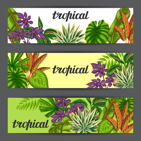 flayers: Banners with tropical plants and leaves. Image for advertising booklets, banners, flayers.