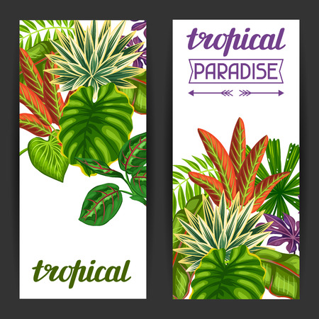 exotic plant: Banners with tropical plants and leaves. Image for advertising booklets, banners, flayers.