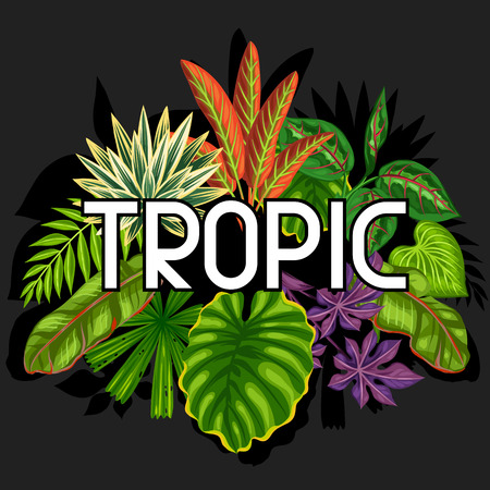 flayers: Background with stylized tropical plants and leaves. Image for advertising booklets, banners, flayers, cards, textile printing.