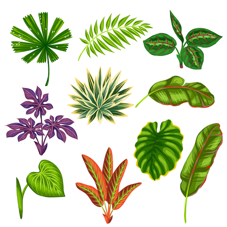 tropical plants: Set of stylized tropical plants and leaves. Objects for decoration, design on advertising booklets, banners, flayers. Illustration