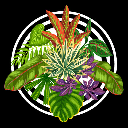 exotic plant: Background with stylized tropical plants and leaves. Image for advertising booklets, banners, flayers, cards, textile printing.