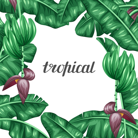 tree design: Background with banana leaves. Decorative image of tropical foliage, flowers and fruits. Design Image for advertising booklets, banners, flayers, cards. Illustration