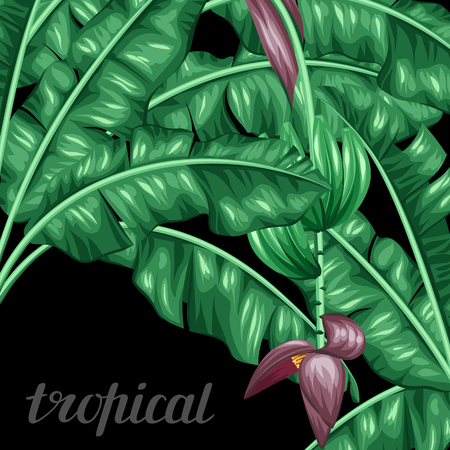 Background with banana leaves. Decorative image of tropical foliage, flowers and fruits. Design Image for advertising booklets, banners, flayers, cards. Ilustração