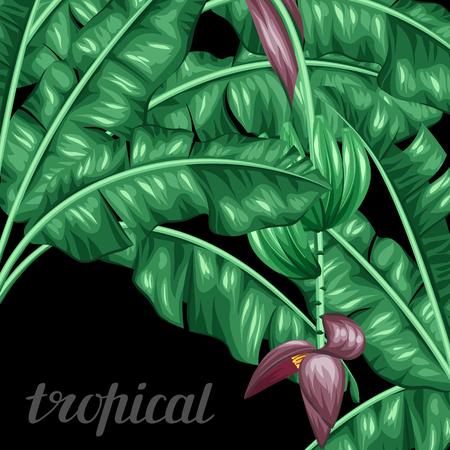 Tło z liśćmi bananowca. Dekoracyjny obraz tropikalnych liści, kwiatów i owoców. Zaprojektuj obraz na broszury reklamowe, banery, ulotki, karty.
