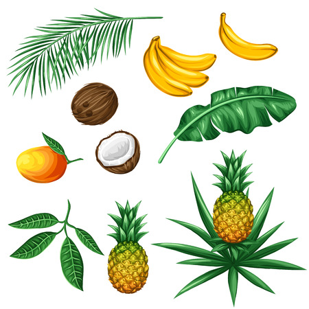 Set of tropical fruits and leaves. Objects for decoration, design on advertising booklets, packaging, menu, flayers. Vettoriali