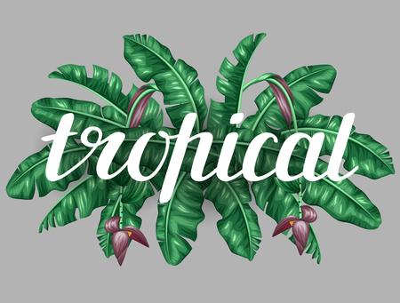 frutas tropicales: Fondo con las hojas de plátano. Imagen decorativa de tropicales follaje, flores y frutas. Diseño de folletos publicitarios, banners, desolladores, tarjetas, impresión textil.
