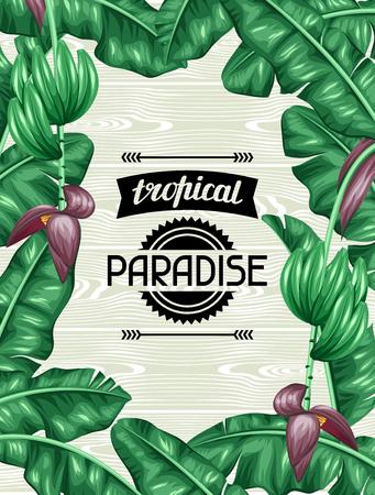frutas tropicales: Capítulo con las hojas de plátano. Imagen decorativa de tropicales follaje, flores y frutas. Diseño de folletos publicitarios, banners, desolladores, tarjetas.