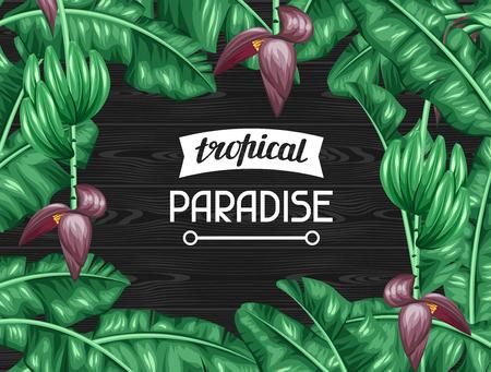 hojas parra: Capítulo con las hojas de plátano. Imagen decorativa de tropicales follaje, flores y frutas. Diseño de folletos publicitarios, banners, desolladores, tarjetas.