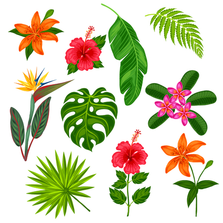 Conjunto de estilizadas tropicales plantas, hojas y flores. Objetos de decoración, diseño de folletos publicitarios, banners, desolladores.