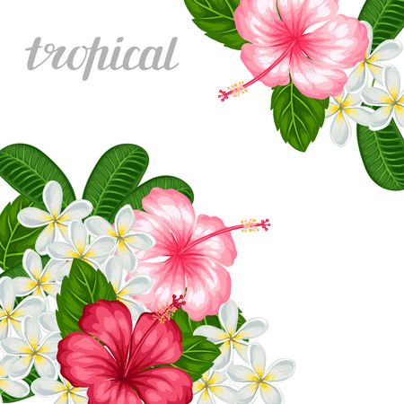 exotic flowers: Background with tropical flowers hibiscus and plumeria. Image for holiday invitations, greeting cards, posters.