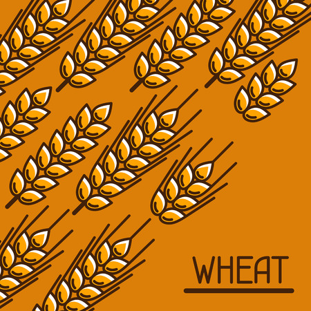 rye: Background with wheat. Agricultural image natural golden ears of barley or rye. Design for packaging, brochures and advertising booklets.