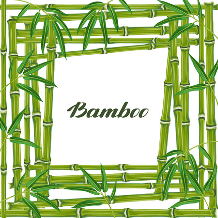 resorts: Frame with bamboo plants and leaves. Design for cards, flayers, brochures, advertising booklets.