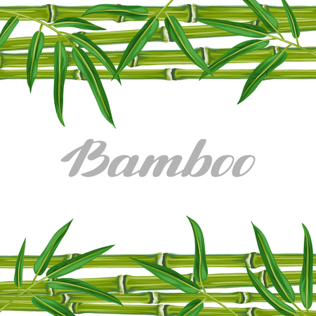 flayers: Background with bamboo plants and leaves. Image for holiday invitations, greeting cards, posters, advertising booklets, banners, flayers. Illustration