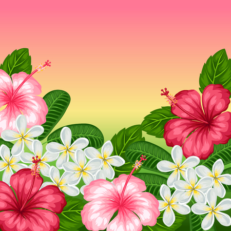 pink plumeria: Background with tropical flowers hibiscus and plumeria. Image for holiday invitations, greeting cards, posters.