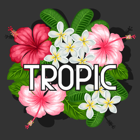 pink plumeria: Background with tropical flowers hibiscus and plumeria. Image for design on t-shirts, prints, invitations, greeting cards, posters. Illustration