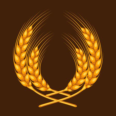 cebada: El manojo de trigo, cebada o centeno oídos. Imagen Agrícola de envases decoración de pan, etiquetas de cerveza, folletos y folletos publicitarios.