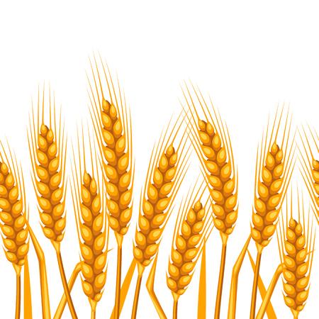 cebada: sin patrón, con el trigo. imagen Agrícola naturales orejas de oro de la cebada o centeno. Fácil de usar para el telón de fondo, textiles, papel de envolver, papel pintado.