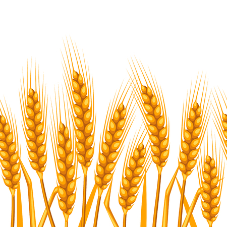 Seamless pattern with wheat. Agricultural image natural golden ears of barley or rye. Easy to use for backdrop, textile, wrapping paper, wallpaper. Illustration