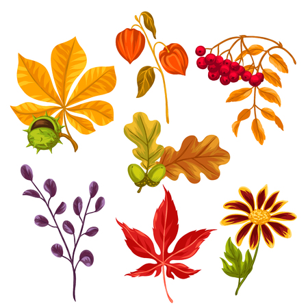 design objects: Set of stylized autumn leaves and plants. Objects for decoration, design on advertising booklets, banners, flayers.