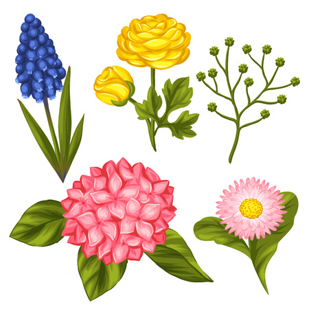 decorative objects: Set of garden flowers. Decorative hortense, ranunculus, muscari and marguerite. Objects for decoration wedding invitations, romantic cards.