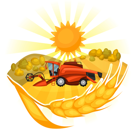 harvesting: Combine harvester on wheat field. Agricultural illustration farm rural landscape.