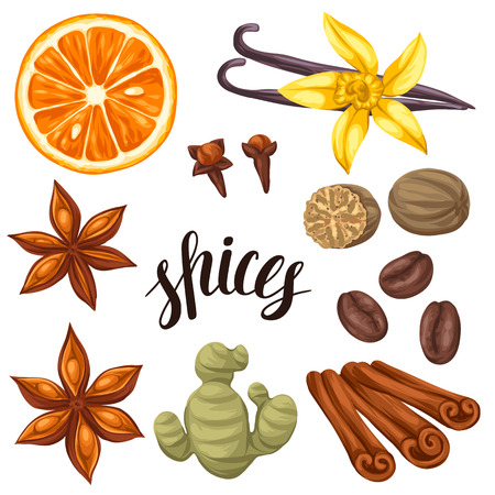 star anise: Various stylized spices set. Illustration of anise cloves vanilla ginger and cinnamon.