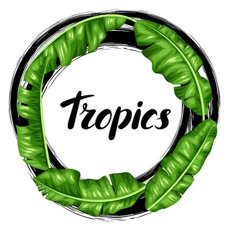 Capítulo con las hojas de plátano. Imagen de la decorativo follaje tropical.