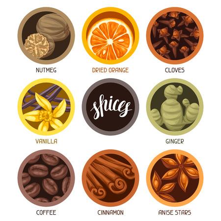 nutmeg: Various stylized spices set. Illustration of anise cloves vanilla ginger and cinnamon.