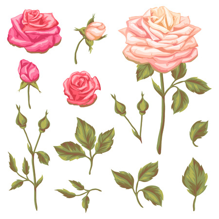 decorative objects: Set of floral elements with vintage roses. Decorative retro flowers. Objects for decoration wedding invitations, romantic cards. Illustration