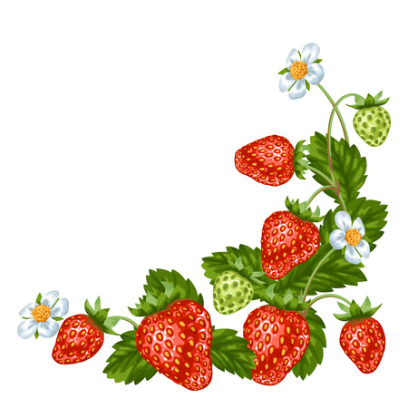 Decorative element with red strawberries. Illustration of berries and leaves.