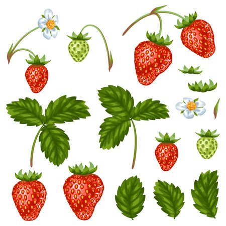 red leaves: Set of red strawberries, flowers and leaves.