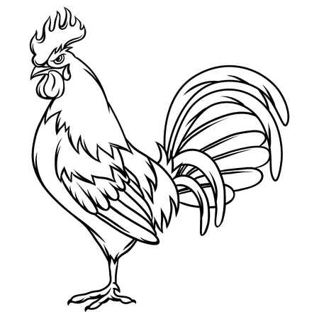 drawing: Hand drawn illustration of black rooster on white background.