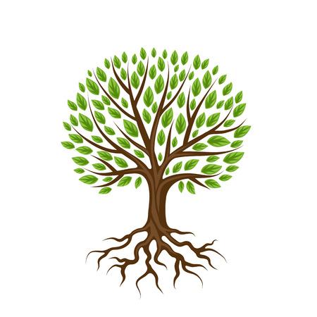 arbol con raices: árbol estilizado abstracto con las raíces y las hojas. ilustración Natural. Vectores