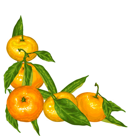 Decorative element with mandarins. Tropical fruits and leaves.