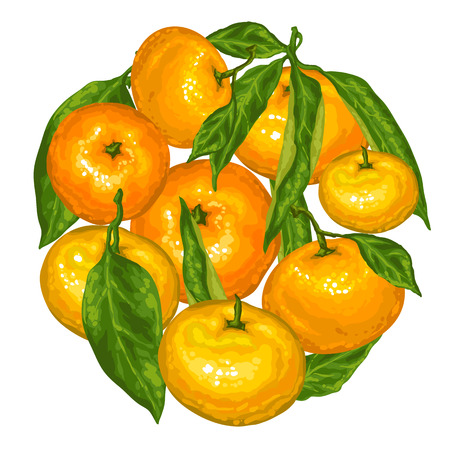 Circle with mandarins. Tropical fruits and leaves. Illustration