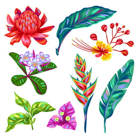 Set of Thailand flowers. Tropical multicolor plants, leaves and buds. Illustration